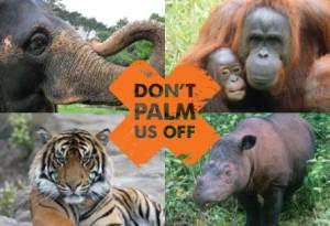 Oil Palm Free